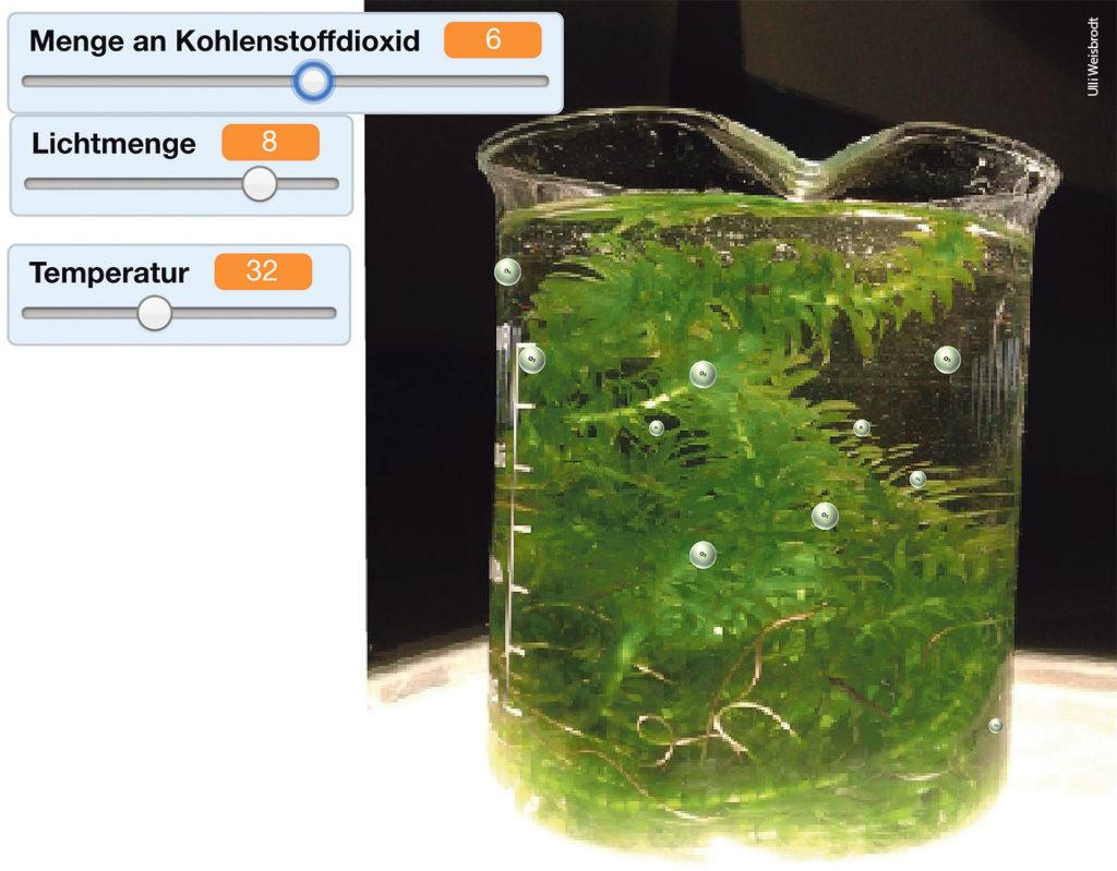 bild1_fotosynthese